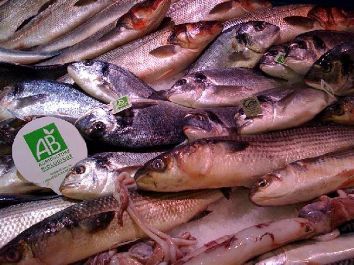 poissons bio
