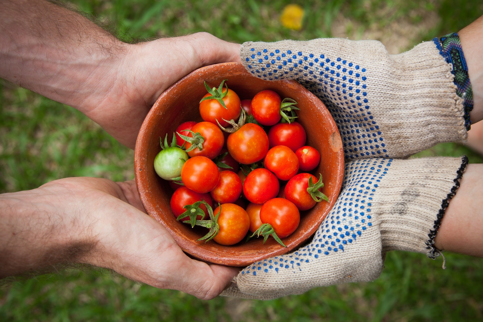 tomates-bio-partage